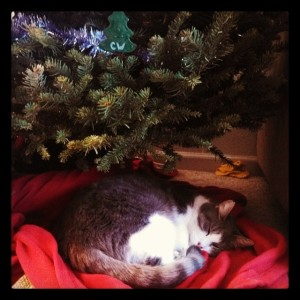Our kitty enjoying the tree.
