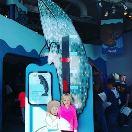 Glad_I_didn_t_have_a_baby_gray_whale.__montereyaq