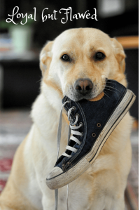 Dog holding a shoe.